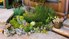 Roof runoff spills from downspouts into a shallow depression planted with grasses and succulents. Outdoor Rooms, Outdoor Gardens, Outdoor Living, Container Gardening, Gardening Tips, Yard Drainage, Rock Garden Design, Succulents In Containers, Fall Plants