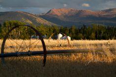 Wheat Fields Pictures of Yukon Fine Art by j2studiosphotography, $30.00