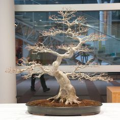 Bonsai are outdoor plants, they can be brought inside for brief periods for display.