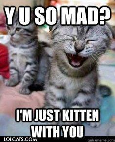 Just kitten around