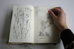 sketchbook/field journal