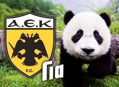Forever Panda Bear, Animals, Animales, Animaux, Panda, Animal, Animais, Pandas
