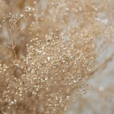 spray paint baby's breath gold - would be good to pair w/ normal baby's breath for gold accents in bridesmaid's bouquets.