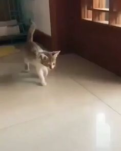 Any cats and kitten that are cute. See more ideas about Cute cats, Cute kittens Tags: Cute Funny Animals, Funny Animal Pictures, Cute Baby Animals, Animals And Pets, Funny Cats, Animals Images, Cute Kittens, Cats And Kittens, Kitty Cats