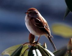 Little Bird by Scott David, via 500px