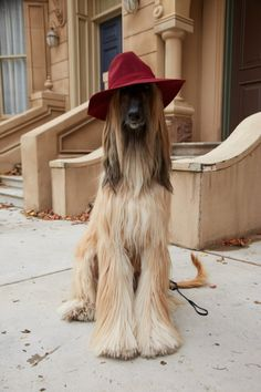 FALL 2015 STREET STYLE EDITORIAL BEHIND-THE-SCENES — Bon Chic Blog Most Beautiful Dogs, Animals Beautiful, Cute Animals, Afghan Hound Puppy, Hound Dog, Dog Photos, Dog Pictures, Funny Dogs, Cute Dogs
