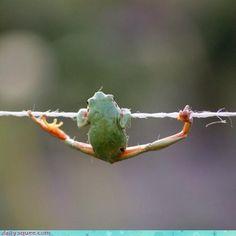 froggie gymnastics