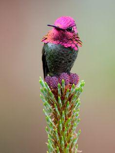 #kolibri