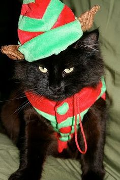 source Santa Claus is coming to town, and these 20 little kitty-cat elves are busy at work, lending a helping paw (or two) to the cause! Christmas Kitten, Christmas Animals, Christmas Time, Cat And Dog Photos, Cat Dressed Up, Santa's Little Helper, Cat Dresses, Little Kitty, Cat Hat
