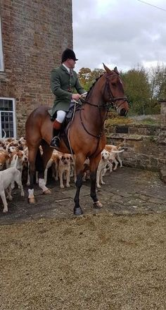 "Southern gal, very happily married wife, mother of three, ""Mimi"" to six grands. British Country, King And Country, Cross Country, Country Living, Country Lifestyle, Fox Hunting, Horse World, The Fox And The Hound, Equestrian Style"