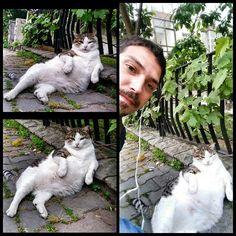 Nası bi kedi bu yarabbim #bigboss #cat #street #emribenverdim #mafia