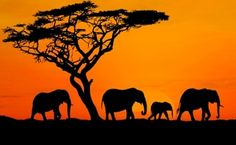 African Safari Is Affordable For You. yes i know i will be in Kenya on Safari for 3 weeks in June 2012 :-) Dream Vacations, Vacation Spots, The Places Youll Go, Places To See, Out Of Africa, Photos Voyages, African Safari, African Elephant, African Art