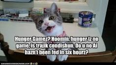 funny hunger games - Google Search