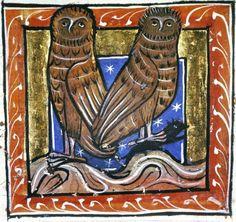 Medieval Bestiary - Owls