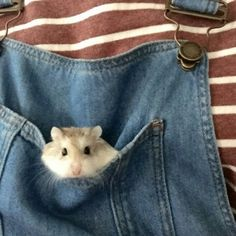 Awww i want this so i can carry my lil' hamster round Cute Creatures, Beautiful Creatures, Cute Hamsters, Cute Little Animals, Animals And Pets, Fur Babies, Puppies, Aesthetics, Random