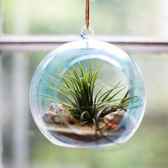 Hanging Glass Globe Terrarium Ideas with a Coastal Beach Theme - Coastal Beach Crafts & DIY Ideas wedding Terrarium succulentes Terrarium Diy, Terrarium Containers, Hanging Terrarium, Air Plant Terrarium, Glass Terrarium, Terrarium Wedding, Glass Vase, Hanging Air Plants, Diy Hanging