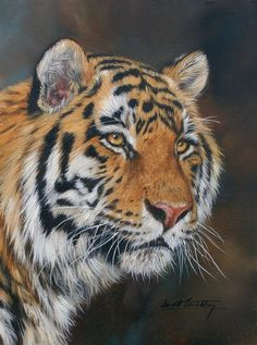 Tiger painting by David Stribbling