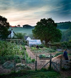 Bertie's Cottage, Devon. The Perfect Veg Plot at Sunrise #country