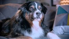 YOGA Tablet 2 Pro Valentine's Day Ad 2015 - Cupid Dog I just love, love this commerical.