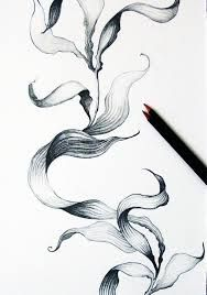 seaweed drawings illustrations pinterest seaweed drawings and projects. Black Bedroom Furniture Sets. Home Design Ideas