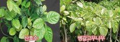 실내 식물 키우면, 미세먼지 걱정 '뚝' : 네이버 블로그