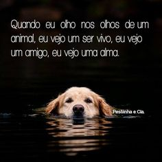 Love for the animals! Love Pet, I Love Dogs, Cute Dogs, Animals And Pets, Baby Animals, Cute Animals, Amor Animal, Dog Nose, Dog Friends