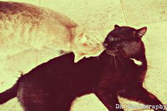 cute animals <3 my two favourite cats in the world!