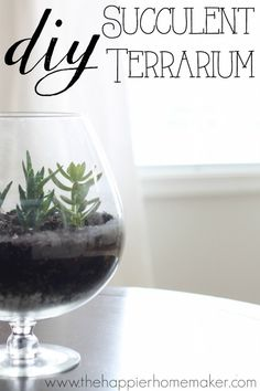 Easy DIY Succulent Terrarium tutorial