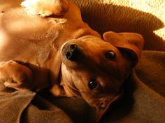 Dog upset stomach home remedies