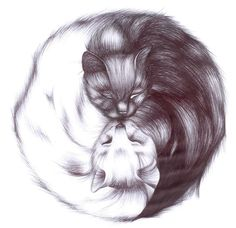 Yin and Yang (Kitten Style) by EyeKissa.deviantart.com on @deviantART
