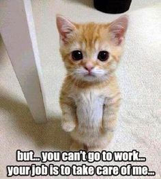 Funny Pictures of the week, 66 images. But ... You Cant Go To Work, Your Job Is To Take Care Of Me - more at megacutie.co.uk