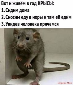 Russian Humor, Best Instagram Photos, Funny Mems, Meme Faces, Funny Photos, Haha, Jokes, Photo And Video, Animals