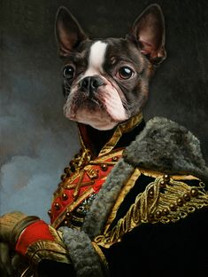 Colorful Animal Paintings, Colorful Animals, Dog Canvas Painting, Dog Paintings, Royal Animals, Boston Terrier Rescue, Old Pug, Acrylic Painting Inspiration, Fancy Cats