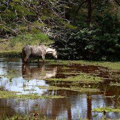 Caballo pastando en los llanos inundados de Apure. #Venezuela #Llanos #Apure #caballo #horse #agua #water #instalike #instadaily #instamood #instagood #instavzla #instacool #ElNacionalWeb #instapic #instafoto #foto #photooftheday #picoftheday #photographer #fotografosDeVenezuela #fotografosDeCaracas #igers #igersven #igersvzla #zeuscronos