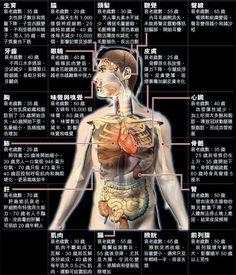 器官衰老年紀 Beautiful Words, Full Body, Anatomy, Spirituality, Health Fitness, Knowledge, Hair Beauty, Nutrition, Healthy