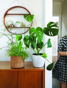 Living with indoor plants - Sanctuary Magazine