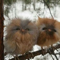 Here is your smile for the day: Aren't they the cutest owlets ever? via