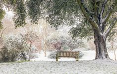 London - Snow Covered Gardens