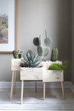 DIY: Blumenkasten aus Holz selber machen - Bild 13 - Cactus dans caisse de vin More More You are in the right place about cute office decor small Wooden Flower Boxes, Plantas Indoor, Deco Floral, Room Tiles, Home And Deco, Plant Decor, Cactus Decor, Cactus Art, Cactus Plants
