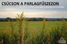 Ezekben a napokban tetőzik a parlagfű pollenkoncentrációja, az ÁNTSZ az ország teljes területére parlagfű riasztást adott ki. A parlagfűre érzékenyeknek számolniuk kell azzal, hogy asztmás tüneteik akár rohamszerűen jelentkezhetnek. A parlagfű súlyos problémát jelenthet a következő hetekben is. Allergiavizsgálat és szakorvosi konzultáció az Allergia Ambulancián: http://www.ambulanciak.hu/index.php/allergia-ambulancia/