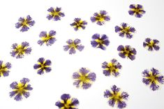 Real Flowers, Dried Flowers, Etsy Crafts, Ranunculus, Candle Making, Soap Making, Wedding Decorations, Scrapbooking, Garden