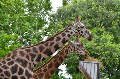 De dierentuin van Barcelona http://bezoekbarcelona.blogspot.com/2013/08/zoo-van-barcelona.html