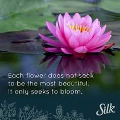 Each our does not seek to be the most beautiful. It only seeks to bloom. Let's all try to find our own special way to bloom today.