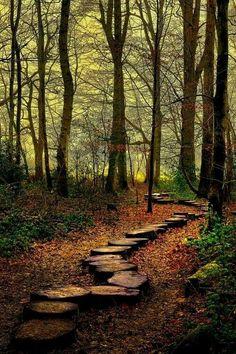 Westonbirt woods, England.