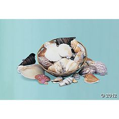 Genuine Seashell Assortment but OUT OF STOCK ATM