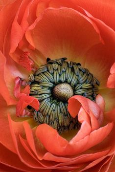 Poppy....one of the color inspirations for the Lipstick collection #flower