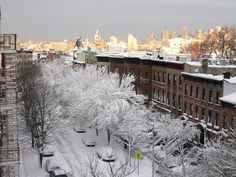 Brooklyn looks under a blanket of snow! Brooklyn New York, New York City, Williamsburg Brooklyn, My Kind Of Town, Luxe Life, Ny Times, Italy, Snow, Park