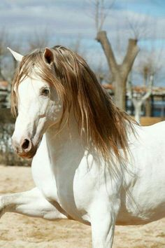 Gorgeous colored horse.
