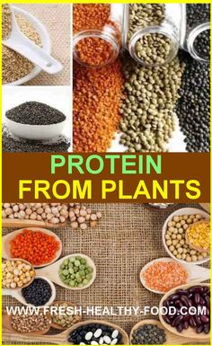 Human body needs protein in order to do variety of functions...