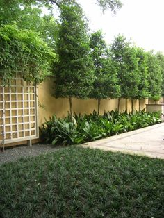 savannah holly privacy screen with under planting